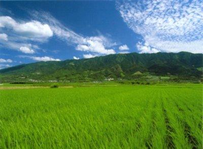 画像1: 若竹屋 渓(たに) 純米吟醸 1800ml