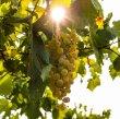 画像4: 【白・辛口・スパークリングワイン】Cà Rovere Brut Nature  MIL.2015 750ml 1本 (4)